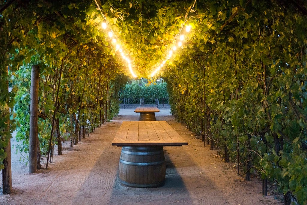 PERGOLA OF GRAPEVINES - PERFECT PLACE TO DINE