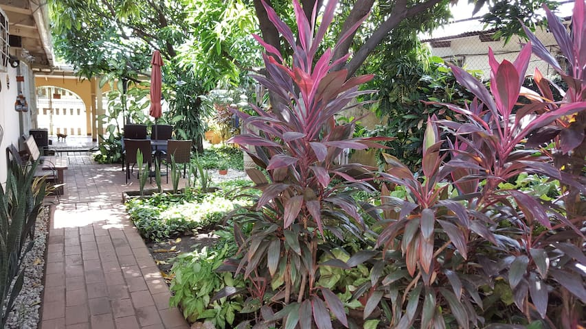 garden view from room door
