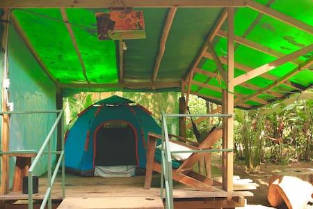 Tents Bob & Rasta - Jungle and Pacific