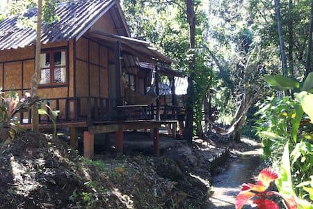 Bamboo stream view - Pai