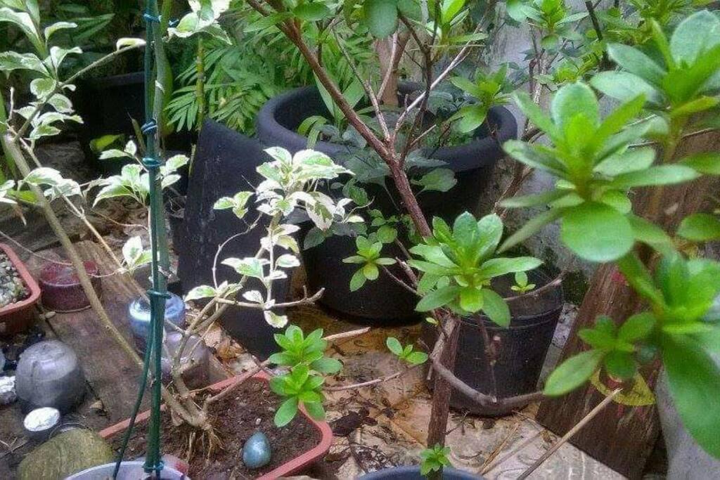 O jardim é sustentável, com minhocário e captação de água da chuva