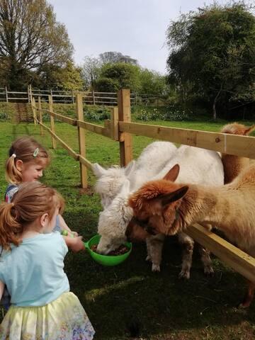Mini farm family break. A retreat for all.