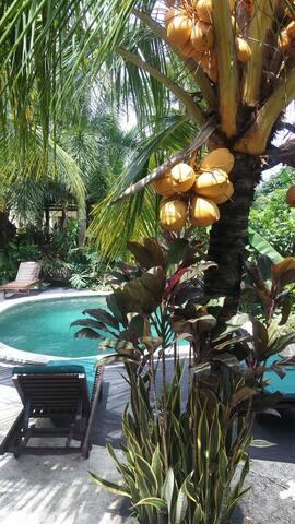 Pool seen from terrace