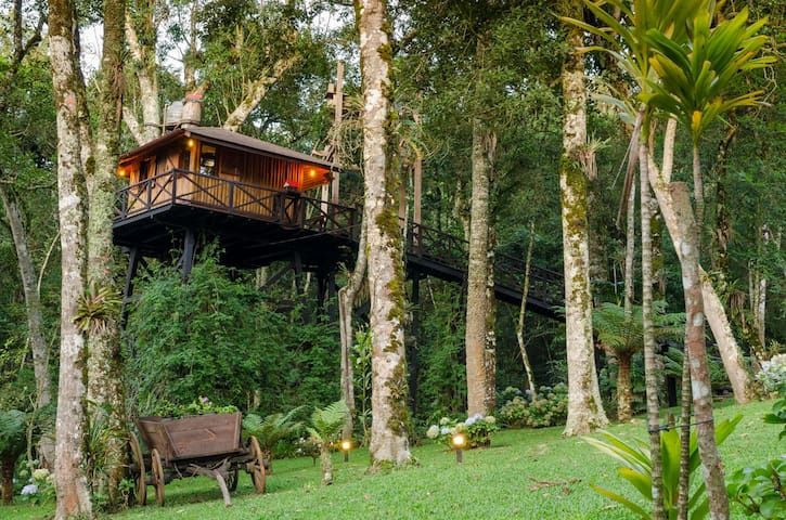 Cozy TreeHouse in Monte Verde - MG (Brazil) - Monte Verde - Treehouse