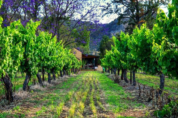 Elysium vineyard and Cottage