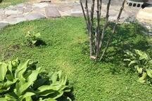 お庭には150種類以上の植物が植わっています。四季折々のお花がたくさん咲きます。