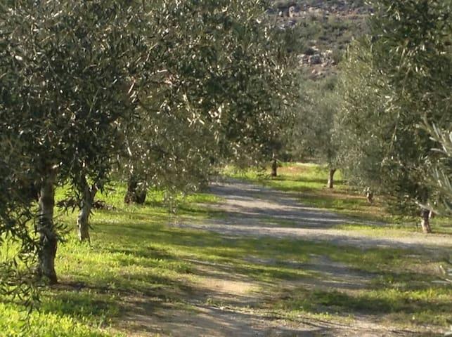 Κτήμα Αγριλιά στα Βάτικα Λακωνίας - Ktima Agrilia