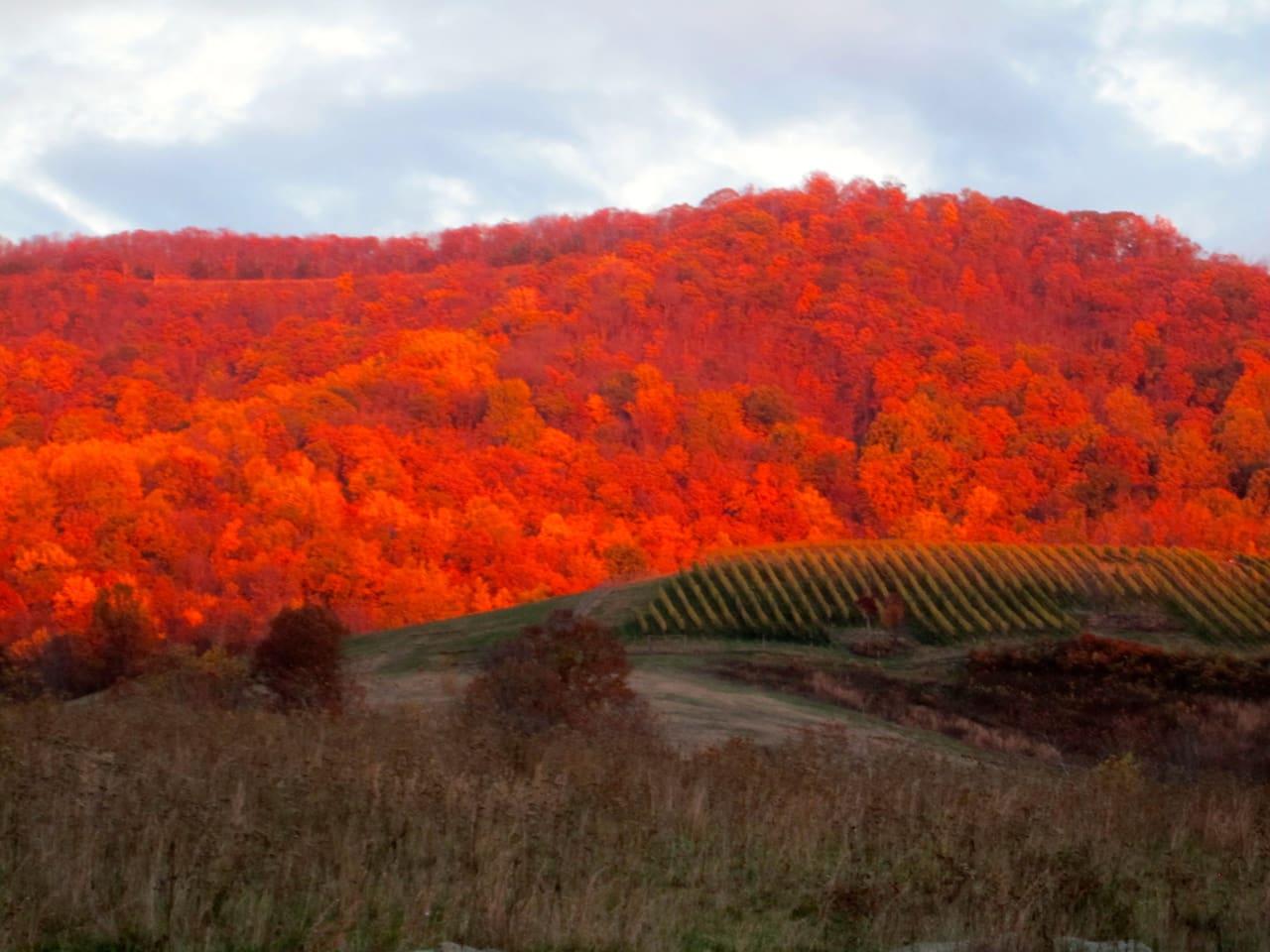 Vineyard Vista Country Getaway