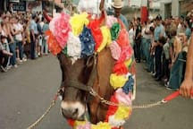 Calf's Annual Festival every January! Call to confirm the date 7879422867