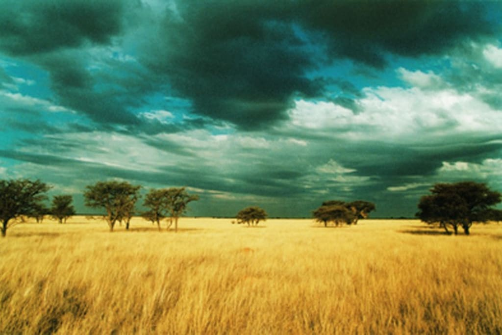 The Out of Africa landscape