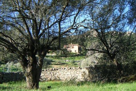 una camera spaziosa per 3/4 persone - Baia Sardinia