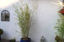 Patio/Town Garden