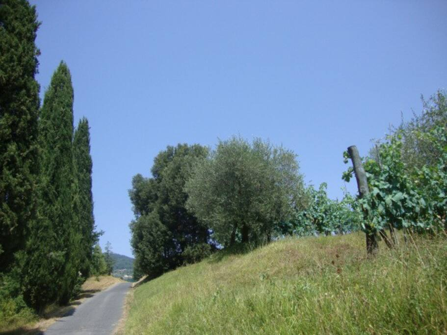 Panorama in Lunigiana