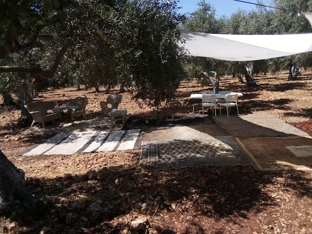 small camping site in the middle of a olive grove