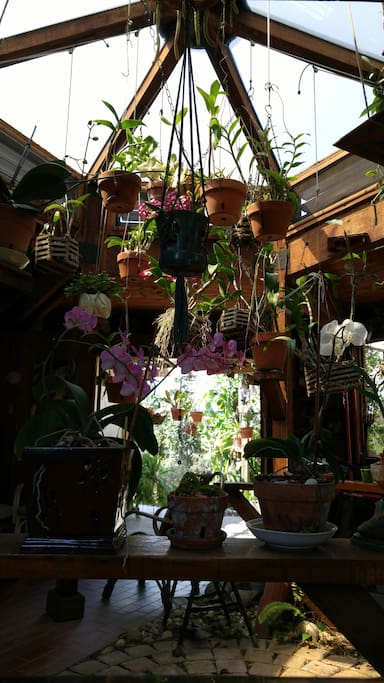 Orchid room, lanai, cedar room, studio and bar that is used by the artist, fine place for meditation, also opens up with more than thirty windows to view most of the exotic fruit trees that produces different times of the year