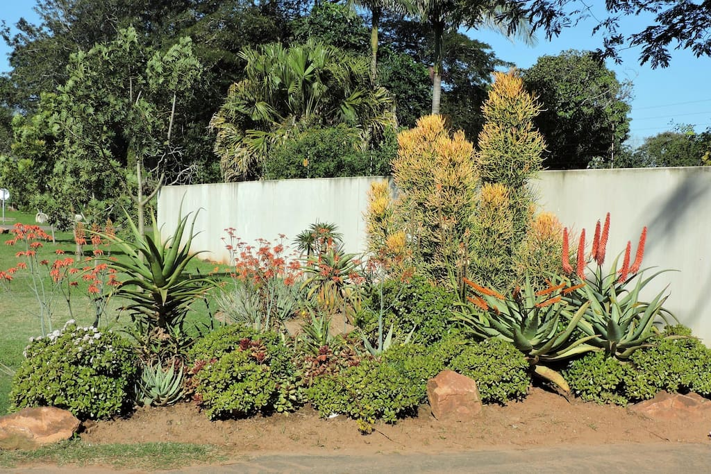 The entrance to Aloe House with winter flowering aloes
