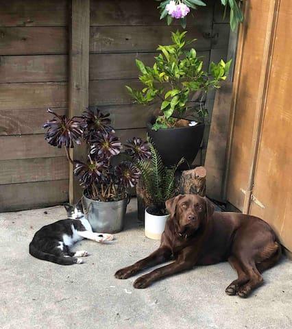 Bomba and Kitty