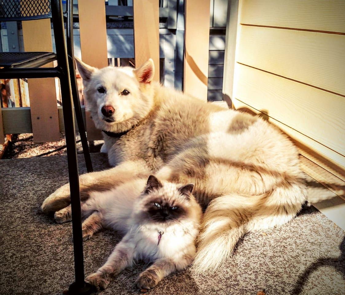 Olaenja (kitty) and Kiara (doggy) are both very friendly and enjoying playing!