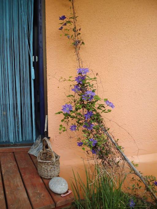 Eingang vom Garten
