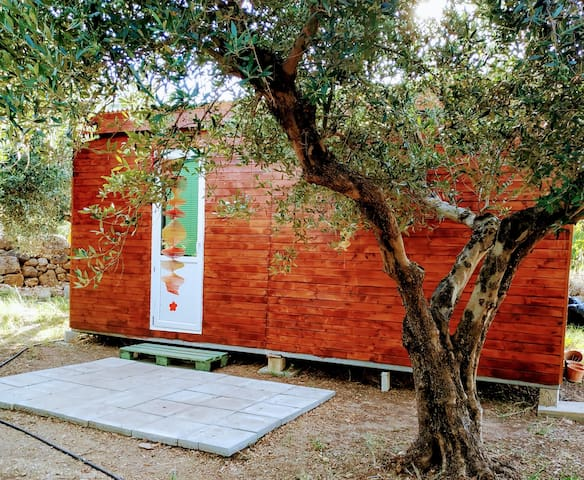Wooden cabin in the olive grove by the river