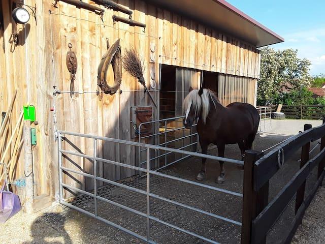 Gemütliches Zimmer auf dem Pferdehof Schneider