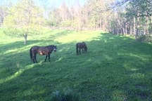 East pasture with my two rescue horses.
