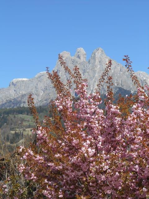 Appartamento vacanza in Primiero -Trentino-
