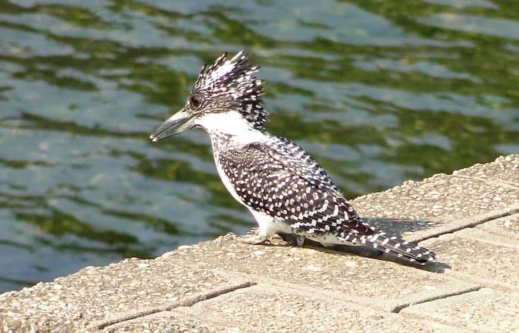 Jaagar - Birding Paradise at Corbett, Ramnagar