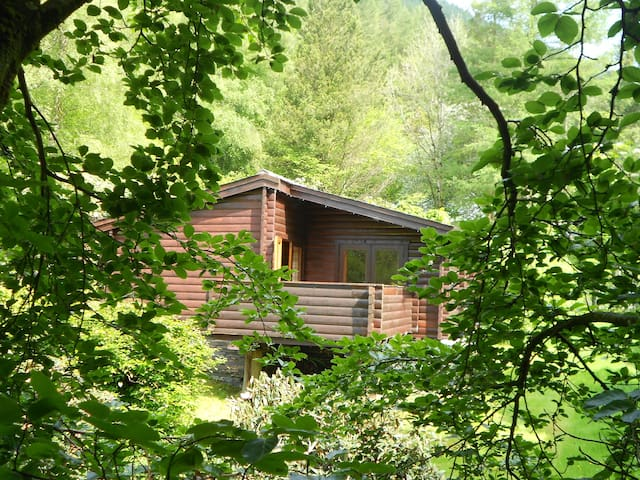Cosy log cabin in great woodland setting - Corris  - Hytte