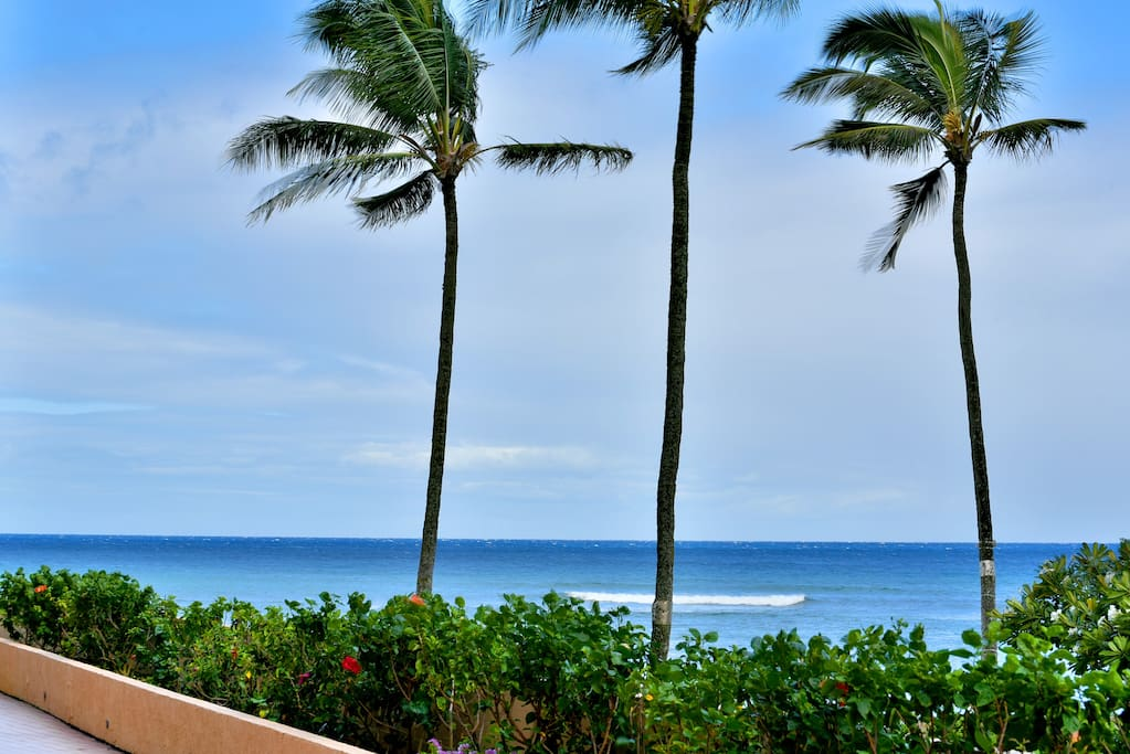 Walk right off your lanai to the garden and beach!