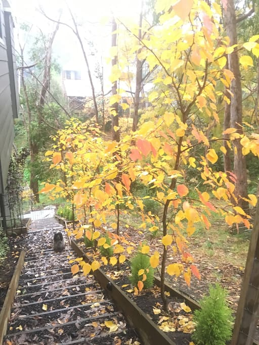 Autumn has arrived this week (May 18th) along with the smell of log fires and an amazing array of colours- view down your private stairs leading to your apartment.