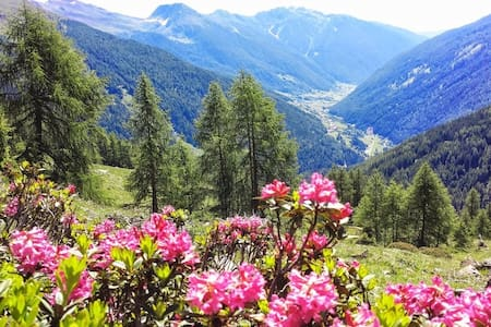 Trentino/Val di Rabbi/Stelvio Parc - appartements - Province of Trento