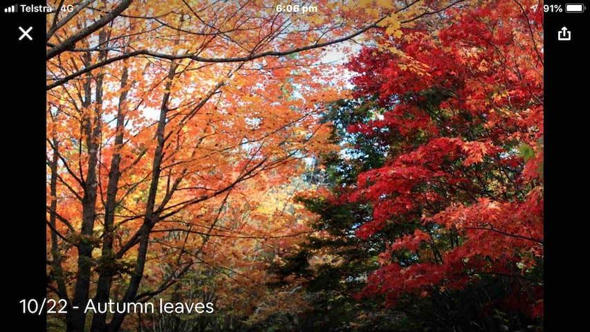 The colours of autumn in Blackheath