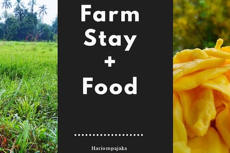Work From Farm 🌻Stay ➕Food🍱 Experience Village