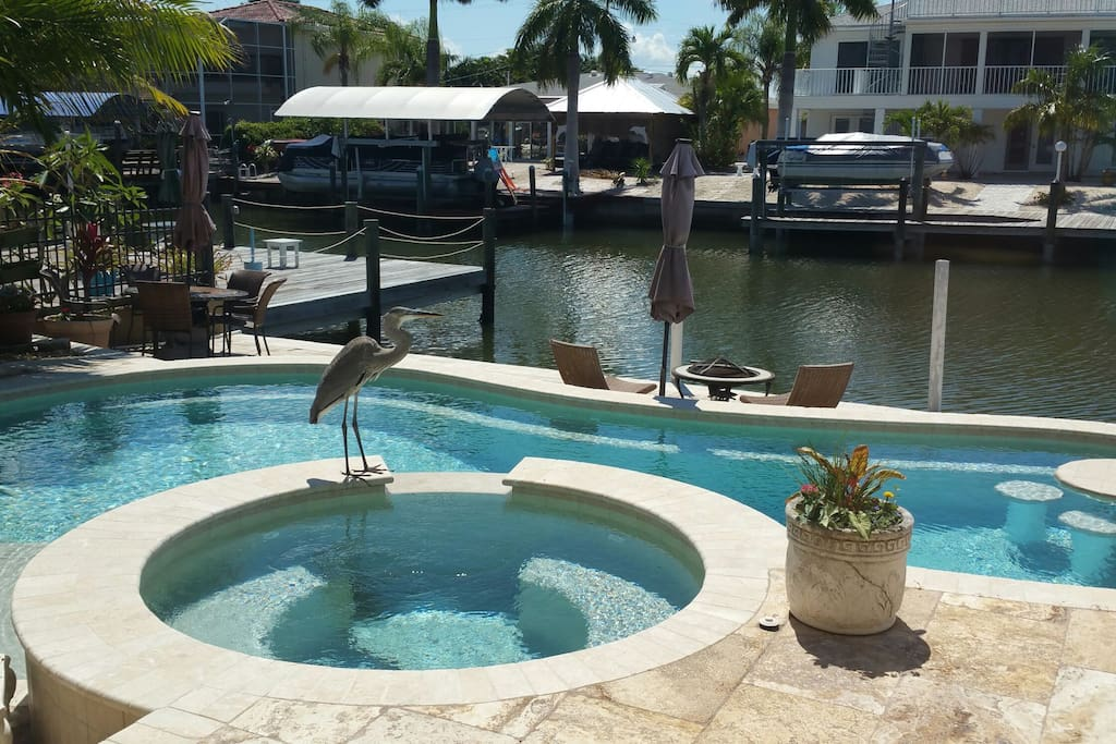 Beautiful pool overlooking wide canal.  Henry Heron comes for a drink almost every day!