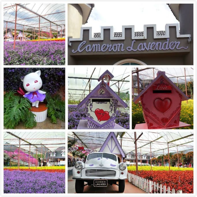 This is lavender garden place
