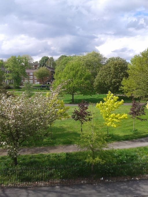 View of the park opposite