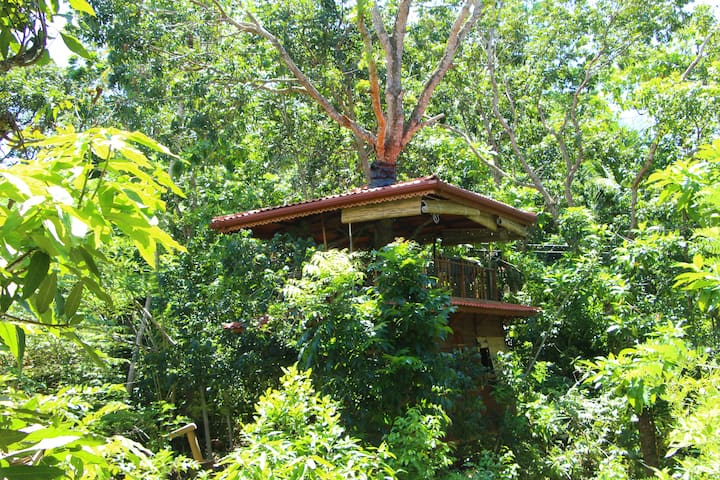 Tree House Midigama