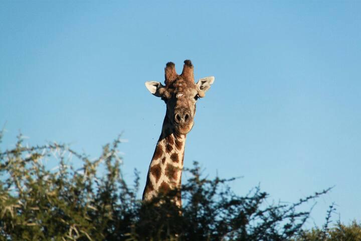 Wiets Safaris Private Nature Reserve Kimberley