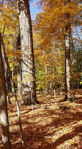Five acres of old growth sugar maple put on quite a show.
