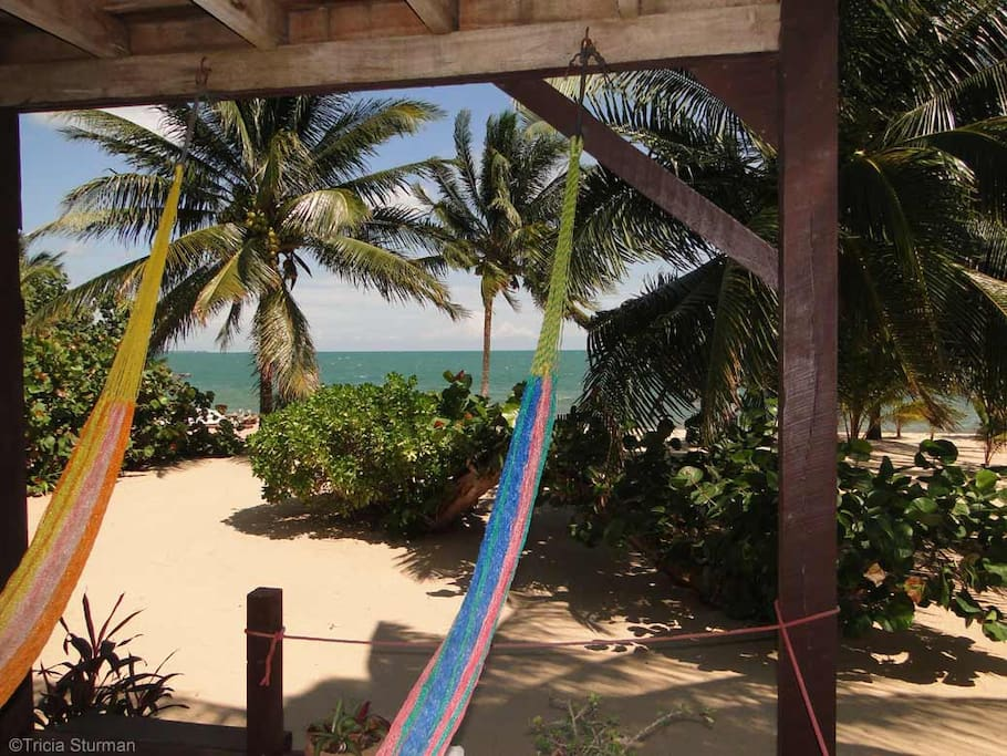 View from your hammocks