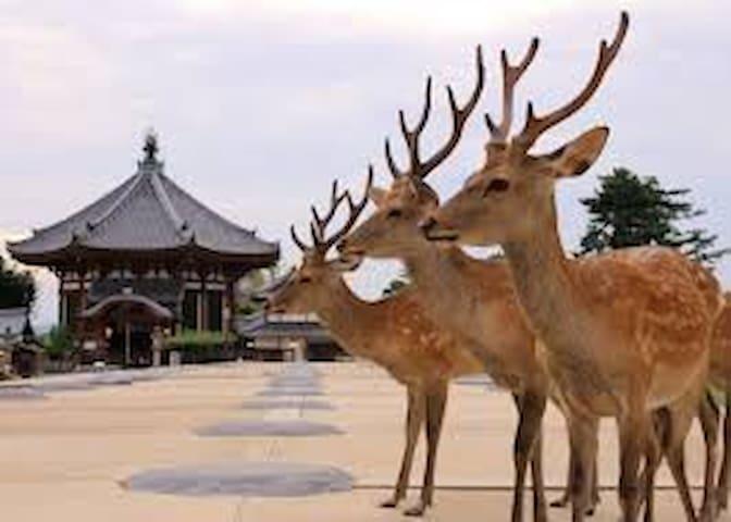 nara - Nara-shi - House