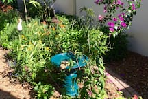 Milkweed and other butterfly nectar plants along with a birdbath ensure that there will always be activity in the backyard!