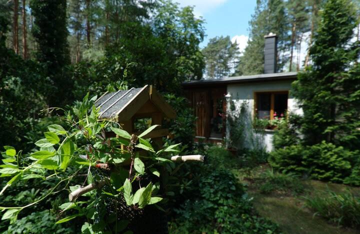 Waldidyll in Fichtenwalde