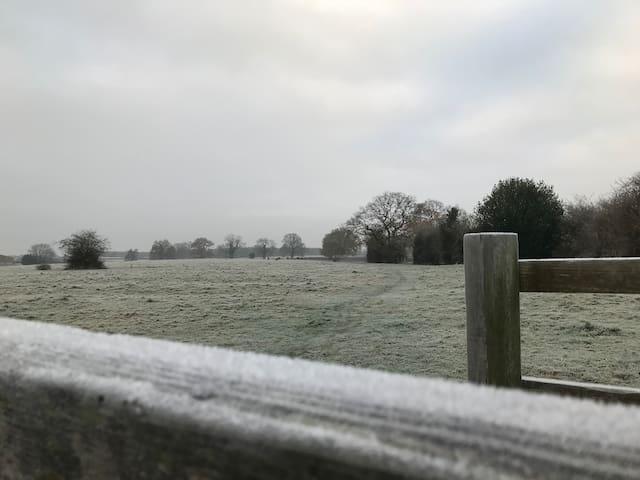 Frosty morning stroll