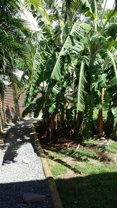 L'accès privatif  à Bambou