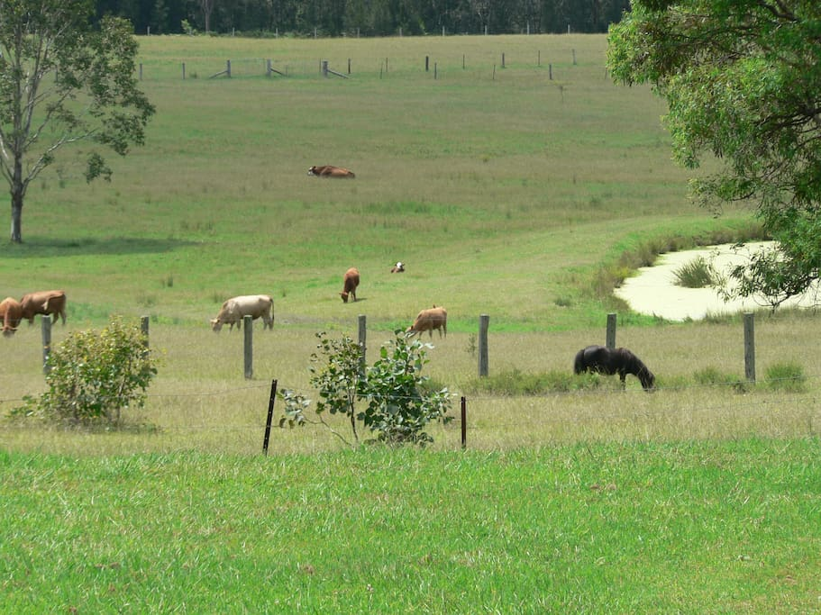 Paddocks with cattle and ponies
