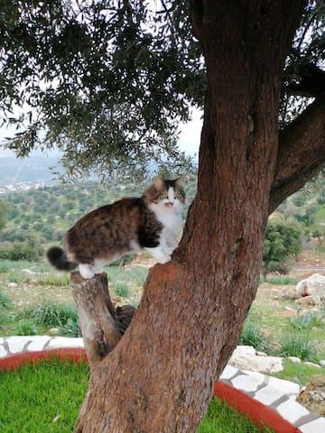 Getaway Spring & Summer Abode in Jordan