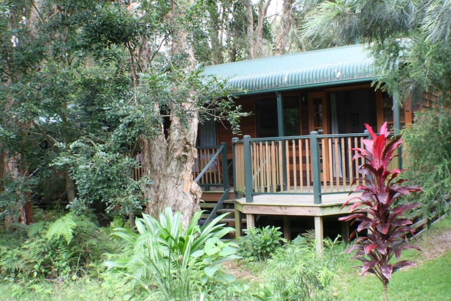 Secluded in the rainforest