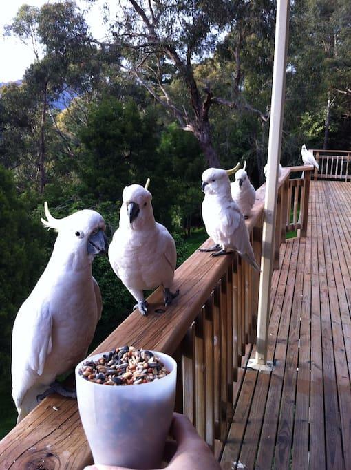 Some friendly locals.